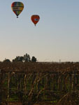 Over the Vineyards